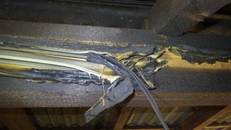 Leitungen vom Typ PV1-F sind widerstandsfähig und bieten einen gewissen Schutz