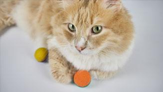 Katze beschäftigen mit Schaumstoffbälle