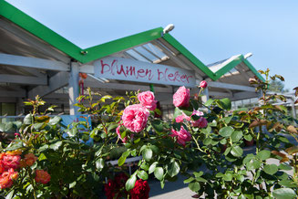 Blumen Bleker Wiesbaden