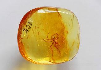 Инклюзы в янтаре:     Arachnida, Araneida
