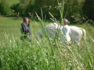 Sandrine Fournier Nature et Sens Santé bien être Médiation animale Sophrologie