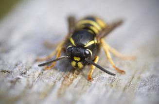 Zecke Stich Biss Verletzung Erste Hilfe Selbstbehandlung Zeckenbiss Biene Ameise Käfer Insekt Krise Katastrophe Befall Stich Schmerz Tipps Hausmittel Tricks Wespenstich Moskito Stechmückenstich