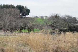 境川遊水地公園周辺の牧草地帯