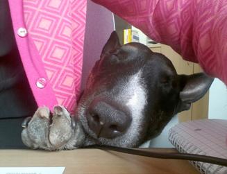 Der Büroschlaf ist aber noch schöner, Juni 2014.