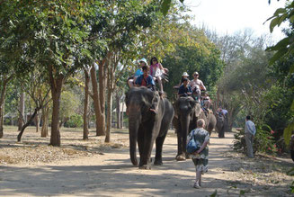 Elephant Camp near Kanchanaburi