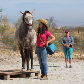 Course photo for learning positive reinforcement horse training