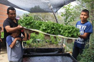 普及を進める簡易水耕栽培。乾燥地でも新鮮な葉物野菜が採れる
