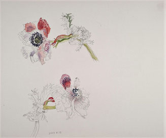 Wilted Anemones 萎れたアネモネ( Pencil drawing, Watercolor painting,Dessin)