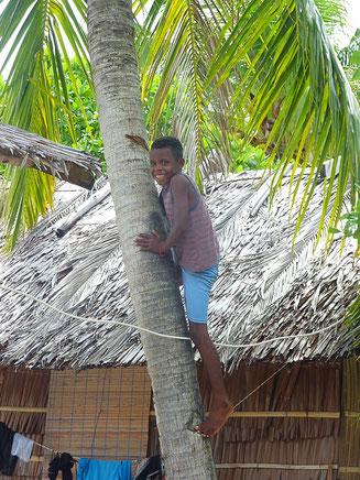 Ein Kind klettert auf die Palme um Kokosnüsse zu pflücken