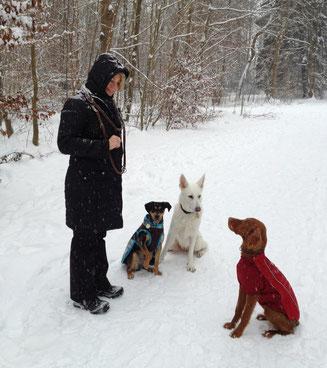 Liza Tavy-Bielan, Hundeschule Teamtraining