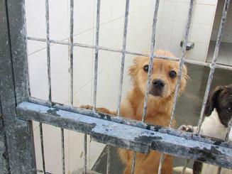 Hunde in Not aus Spanien. Diese Hunde sind Straßenhunde und Hunde aus Tötungsstationen und Tierheimen in Spanien. Hunde adoptieren Spanien. Hunde Spanien retten. Straßenhunde Vermittlung.