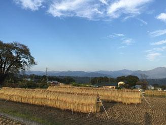 天日干し 〜 秋の牧歌的風景の象徴ですね