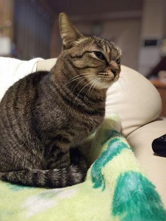 姿勢 猫背 ストレートネック 目線 豊田市フィットネス 豊田市接骨院