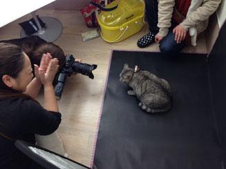 緊張の面持ちの猫さんと励ます撮影陣。とっても素敵な表情が撮れましたよ。