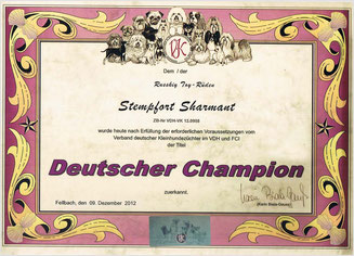 "Titel ""Deutscher Champion (Klub)"" beim Russkiy Toy ""Stempfort Sharmant"""