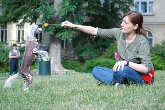 Sarah Unterberger Tricktraining Hundetraining
