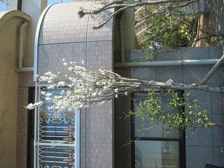 平成30年10月31日 4階バルコニーにて 撮影