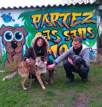 adoption chien refuge de Bréhand - sauvetage vieux chien - Côtes d'Armor - 22 - Bretagne