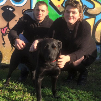 adoption chien de refuge - SPA du Penthièvre - Bréhand (22) - Bretagne