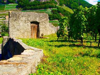 die Mauer zu den Weinbergen