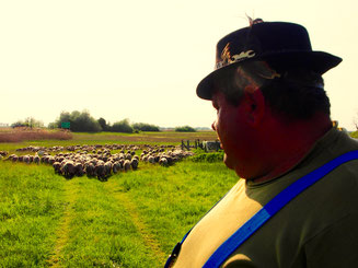 Mirko schaut auf seine Schafherde zurück