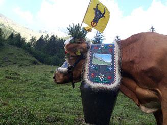 Kuh mit Blumenschmuck