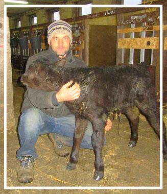 Stefan Leue mit seinem ersten Wagyu Nachwuchs.