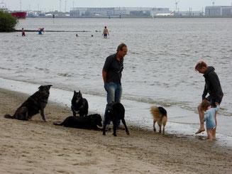 Bild: Hunde am Strand