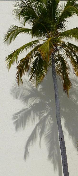 Bild: Palme an einer Häuserwand am Strand von Estero Island in Florida