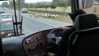 Bild: Coachdriver im Neuseeländischen Bus