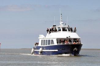Balade en bateau en Baie de Somme - Saint valery sur somme - Le crotoy - Bateau - visite - balade - phoques