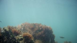 Italien Bari Villa Nova Apulien Meer unter-Wasser Fische Felsen