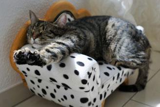 Katze streckt sich auf einem kleinen Sofa.