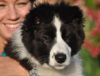 Archie - 3,5 Monate
