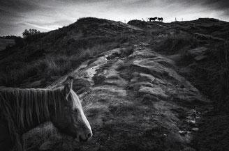 © Fabrice Domenet
