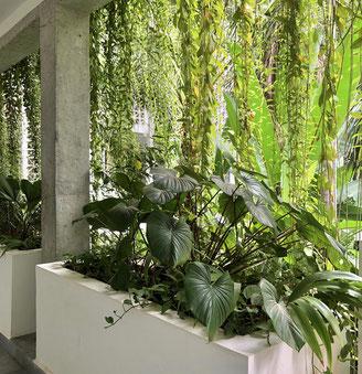 カンボジアには緑を取り入れた建物が多くあります