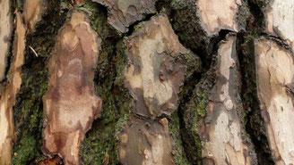 Rauhe Baumrinde zum Fühlen und Tasten. Mit allen Sinnen erleben.