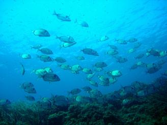 sentier sous-marin villefranche