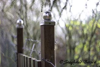 Gartenzaumpfahl mit Edelstahl Kappe. Siegfried Beiser Photography.