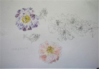 薔薇7 Faded roses(watercolor painting)