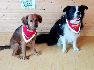 Therapie Begleithund / Halstuch /halsduk terapihund, Hundehaltuch/ Therapiehund