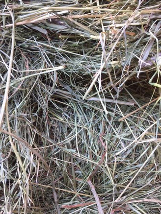 Closeup of a fresh bale, June 11.