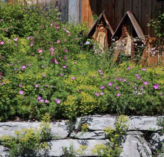 Naturnaher Privatgarten mit Trockenmauern, Nisthilfen und einheimischen Wildpflanzen