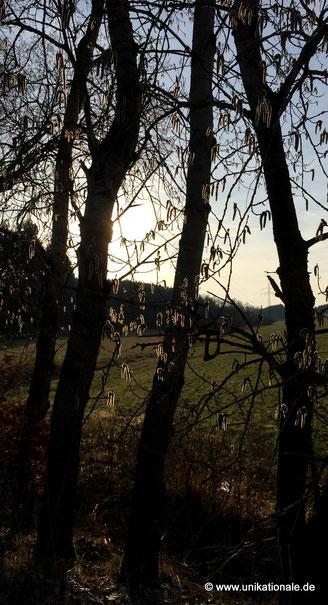 Sonne durch Bäume