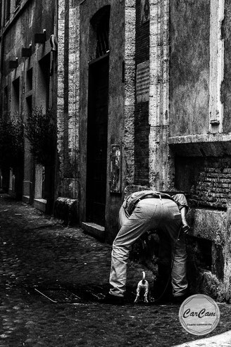 Rome, Roma, dog, fountain, water, tail, black and white, noir et blanc, art, street photography, CarCam