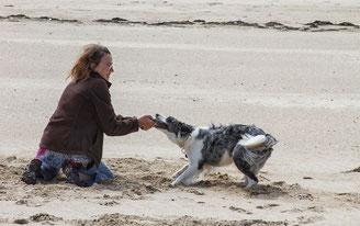 Spiel und Spaß mit Hund am Strand in der Normandie