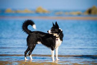 Urlaub mit Hund, Normandie, Cotentin, chiennormandie