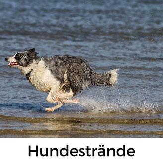 Hundestrände Normandie