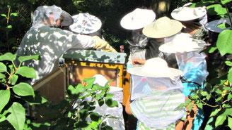 Nachhaltigkeit Workshop mit Schülern Bienenretter