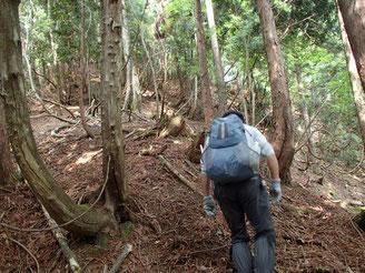 まずは植林地帯の急斜面を登ると